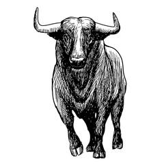 freehand sketch illustration of bul