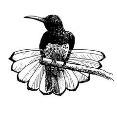 bird doodle hand drawn