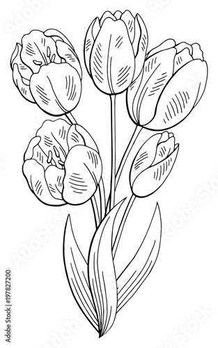 tulip flower graphic black white isolated bouquet sketch