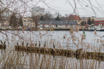 Ufer der Havel in Potsdam an einem bedeckten Frühlingsmorgen