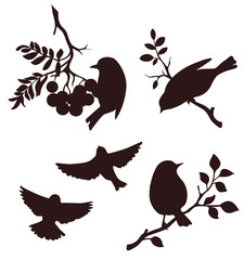 Decorative set of birds sitting on twig of tree. Vector silhouette