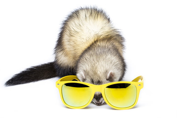 Cute fluffy ferret in a yellow sunglasses ready to summer vacation. Funny shot in a studio on white background.