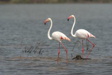 Beautiful flamingos in nature