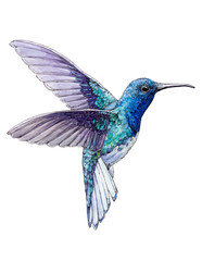 Hand-drawn Hummingbird on white background (isolated)