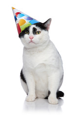 funny birthday cat with cap sliding off head