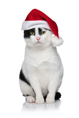 adorable cat with santa hat waiting for Christmas