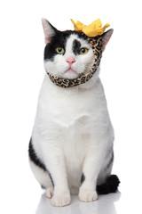 funny seated cat wearing leopard print headband