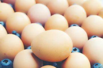 easter chick egg, vintage filter image