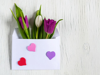 Beautiful tulips in mail envelope. Copy space. White wooden background. Mother's Day, Happy Women's Day