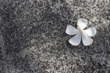 Plumeria flower on ground stone