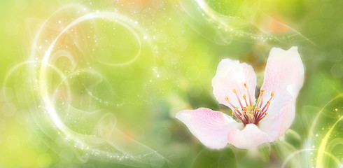 Spring flower close up. Multicolor bokeh background. Spring floral pattern. Copy space.Panoramic format