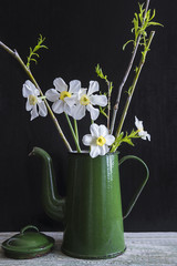 Bouquet of white daffodils in vintage green coffee pot on black background, vertical picture