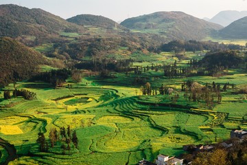 Beautiful green and yellow rapeseed fields in Yunnan, China