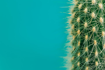 Photo sur Plexiglas Cactus Hipster Cactus plant. space to place your logo