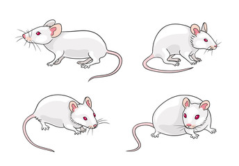 White mice - vector illustration