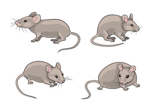 Grey mice - vector illustration