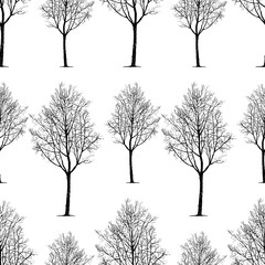 pattern of young deciduous trees
