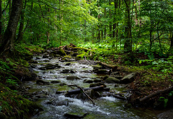 wild brook in the dark forest. lovely and fresh nature scenery in summer time