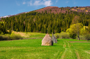 haystack on a grassy meadow among the forest in mountains. lovely rural scenery in springtime