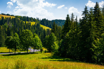 lovely summer countryside in mountains. grassy meadow near the spruce forest