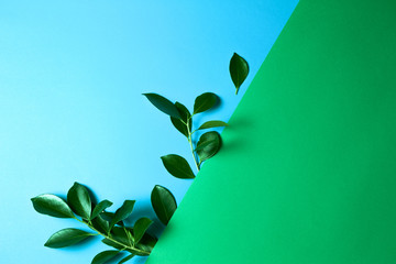 Green tree leaves on green and blue background