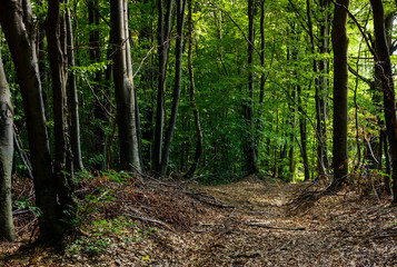 road through forest covered with weathered foliage. beautiful nature scenery, lovely place for a walk or trail running