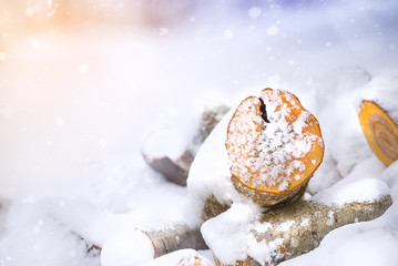 Wooden logs in winter snow