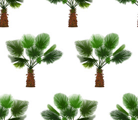 Vector seamless pattern of color palm on white background. Tropical palm background