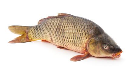 One raw fish.