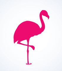 Flamingo. Vector drawing