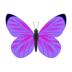 Violet  butterfly vector illustration isolated on white backgrou