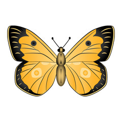 Orange  butterfly vector illustration isolated on white backgrou