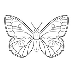 Colorless butterfly vector illustration isolated on white backgr