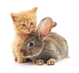 Red kitty and bunny.