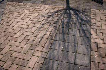 Ombra di rami spogli sulla base del tronco crea l'immagine di un albero capovolto