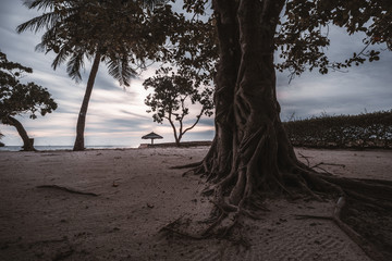 A huge trunk of a tropical tree in the foreground with multiple roots on the evening sandy beach, with palms, lilac cloudy horizon, sunshade and pier in the defocused background