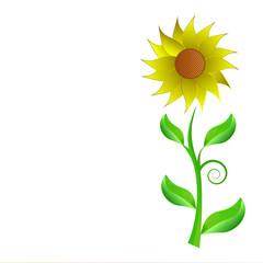 Sunflower, Flower of Hope isolate on white background