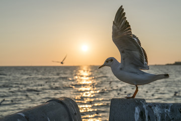 Seagull facing one of the most beautiful sunset