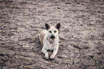 Dog in arid soils lack water.
