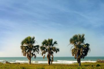 three palms, sea, vacation, travel