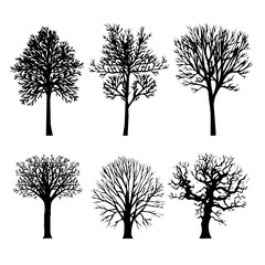 Tree Branch Arid Black Silhouettes Nature Forest Vector Illustration