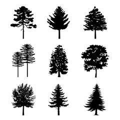 Tree Black Silhouettes Nature Forest Vector Illustration