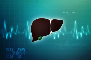 Realistic human liver 3d illustration
