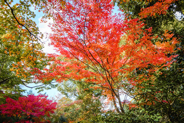 Beautiful Colorful Autumn Leaves / green, yellow, orange, red.