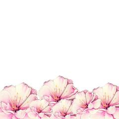 colorful sakura flower