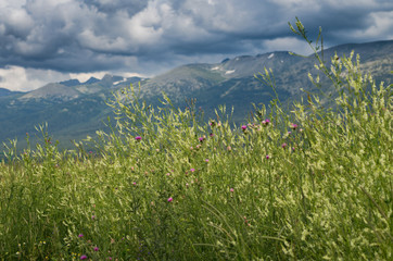 Tall grass, yellow and purple flowers with blurred mountain peaks and cloudy sky in the background