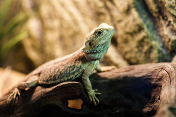 Photo of green lizard in terrarium