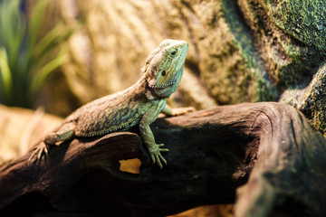 Image of green lizard in terrarium