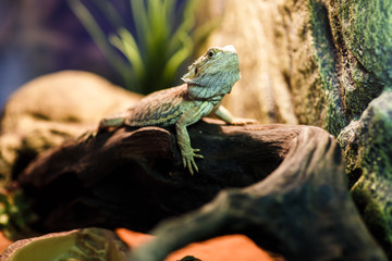 Picture of green lizard in terrarium