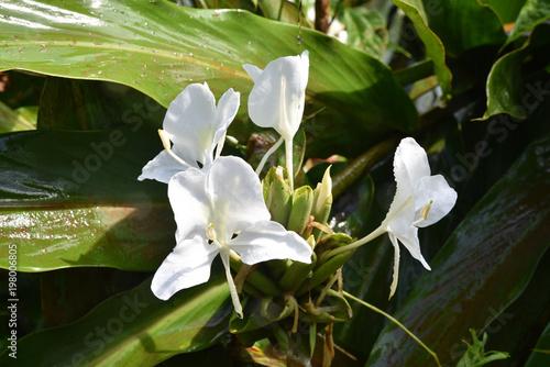 Fleur Blanche De La Jungle Tropicale A Iguazu Argentine Stock